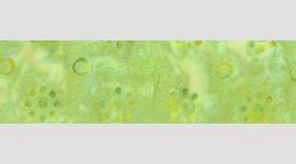 Cooling Tie - 348 Celery Batik
