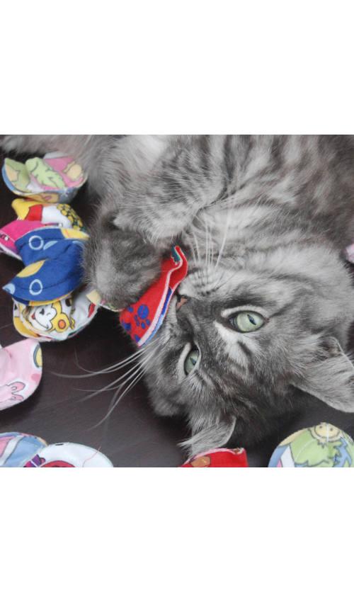 Feline Fortunes - Box of 3