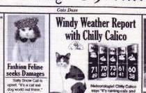 Mat Nip - Cat News