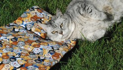 Mat Nip - Kitty Play Mat